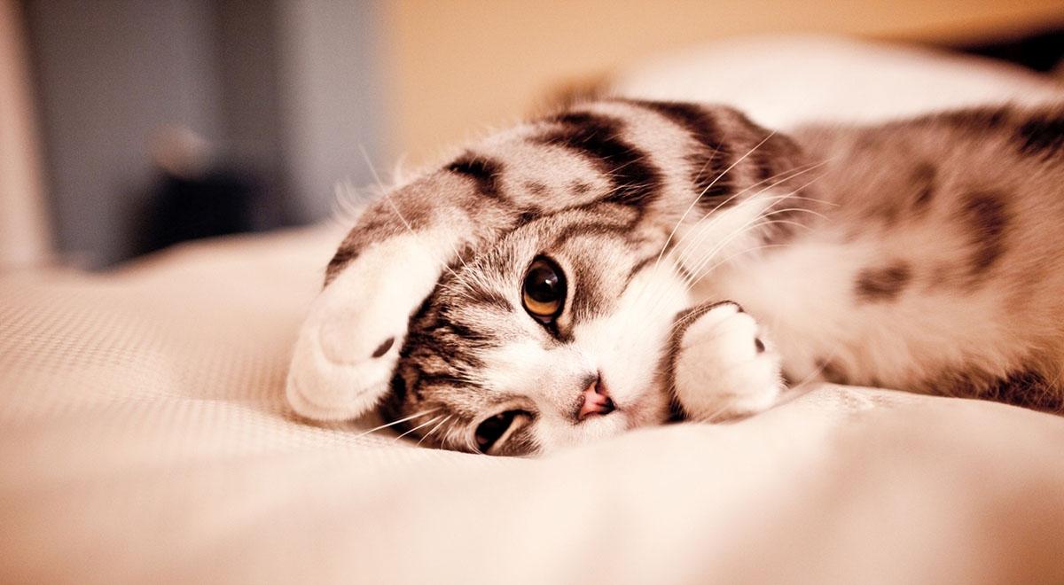 Hoy no hace falta que te levantes, podés ver los #LDV desde la cama