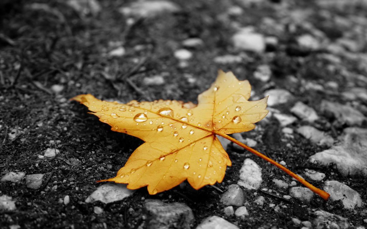 Ahora sí estamos de pleno en otoño y quien nunca te abandona es la #RuletaRusa