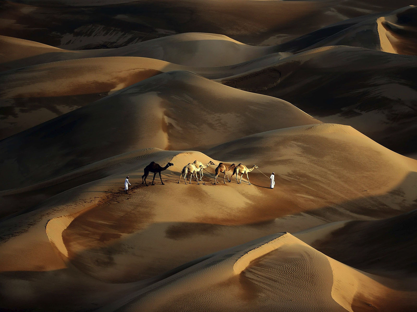 En el desierto que se ha vuelto internet quedan los #LDV
